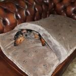 Slaapzak voor hond of poes Taupe /print
